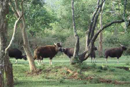 Achanakmar Wildlife Sanctuary
