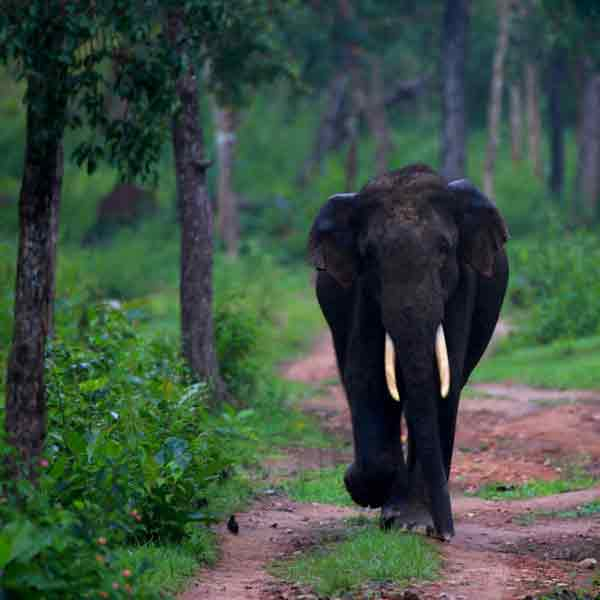 16 Days South India Wildlife Tour